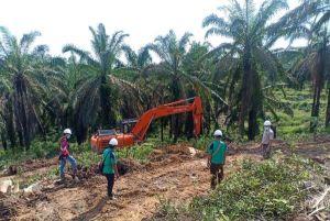 Siap Sukseskan Peremajaan Sawit Rakyat, KUD Bina Usaha Gelar Tumbang Perdana di Jambi