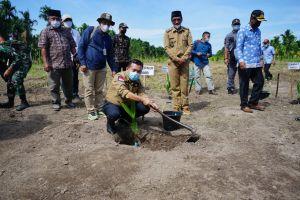 Perkuat Sektor Pertanian, Gubernur Tanam Pinang di Sadu