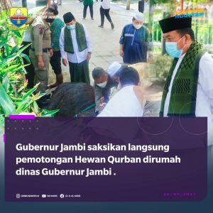 Gubernur Jambi Al-Haris Laksanakan Sholat Idul Adha dan Potong Sapi Kurban di Rumah Dinas