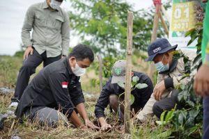 Peringati Hari Kopi Sedunia, Koperasi Koerintji Barokah Tanam 600 Bibit Pohon di TNKS